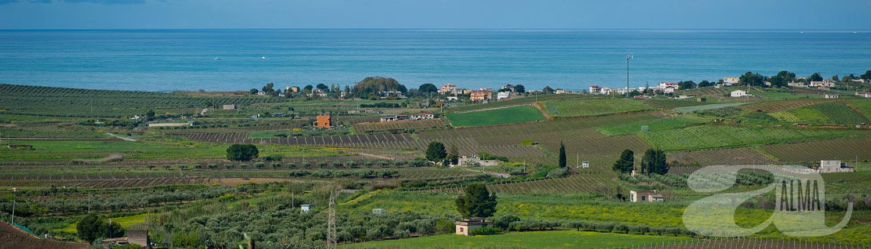 vackra omgivningar i närheten av Casa Alma och produktion av olivolja